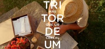 Tritordeum, el nuevo y revolucionario cereal