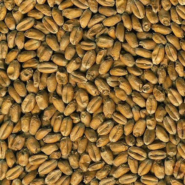 Wheat_X